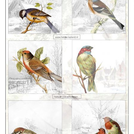 Lapland Vintage  Winter vogels